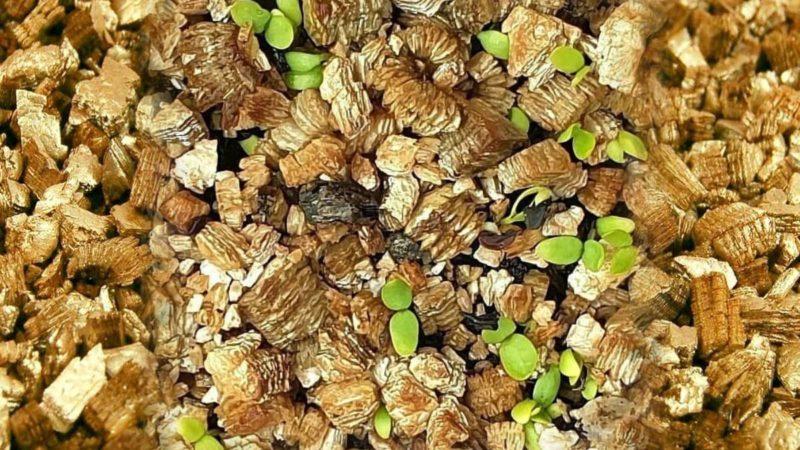 Вермикулит для растений: польза, как применять, плюсы и минусы
